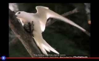 Animali: animali  uccelli  australia  gatti