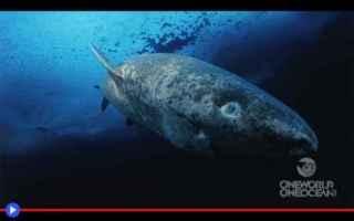 squali  animali  condritti  scienza
