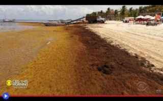 dal Mondo: ambiente  ecologia  alghe  caraibi