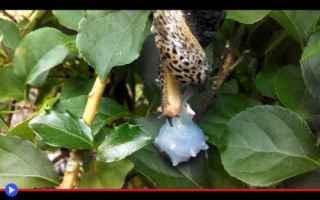animali  lumache  gasteropodi