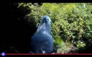 animali  uccelli  pulcini  riproduzione